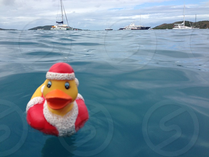 Christmas rubber duckie floating in the caribbean photo