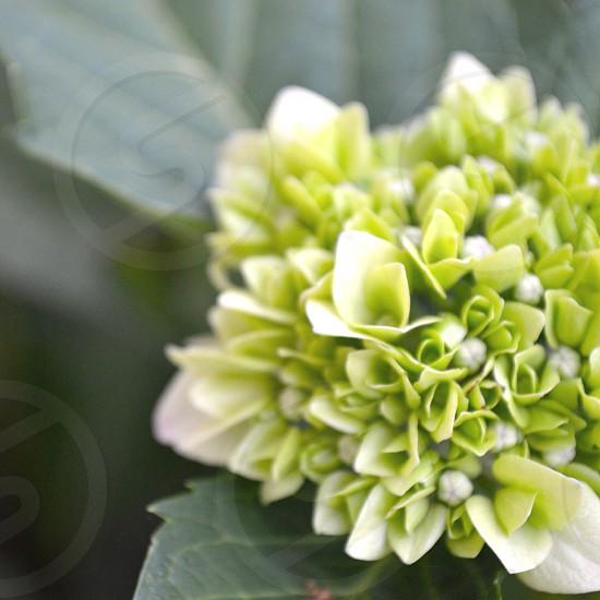 green and yeelo flower photo