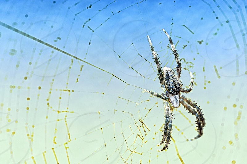 Spider Divergent Colors Creepy Web Bokeh Blue White photo