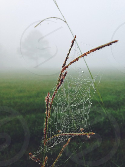 spider web on branches in grass field on cloudy day photo