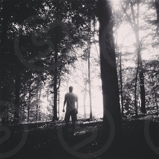 Man Standing NExt to Trees in Forest photo