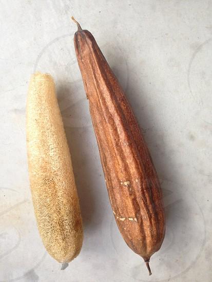 ヘチマ。完熟したものと皮を剥いたもの。 photo