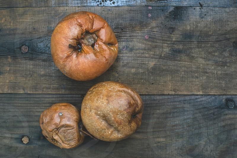 Rotten apples on wood. Day light photo