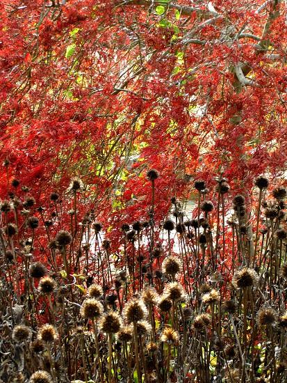 Fall autumn fall foliage foliage autumn leaves fall leaves colorful leaves photo