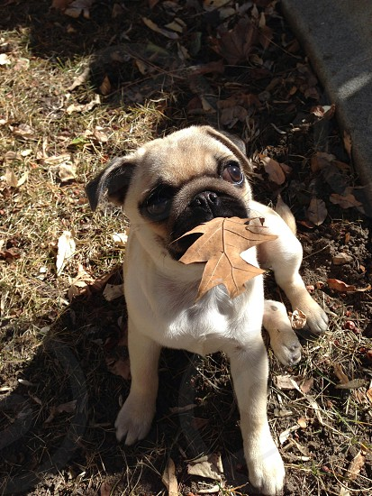 Penny catches a leaf photo