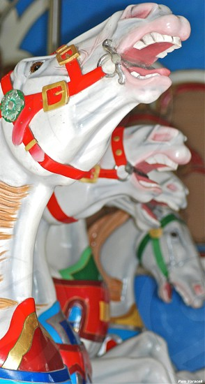 Carousel in Central Park photo