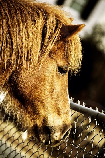 Horse farm brown eyes animals mane fence outdoors ride photo