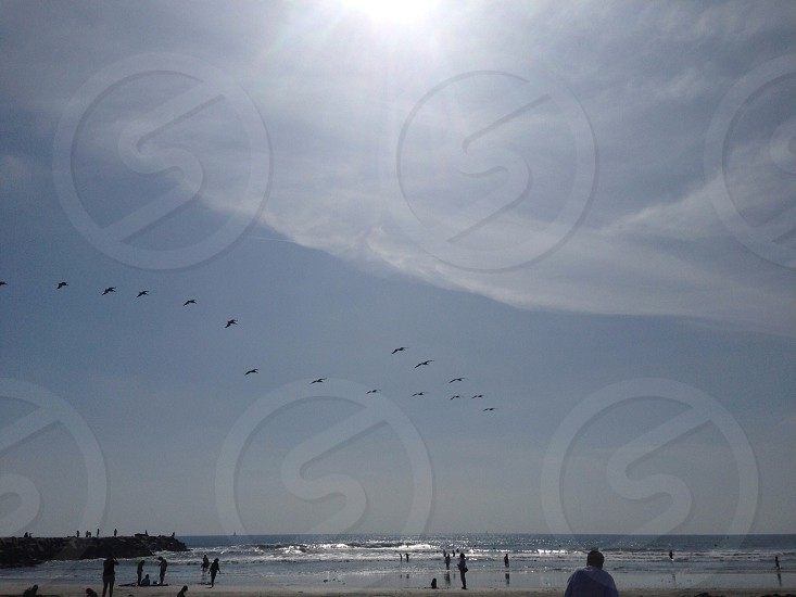pelicans flying in V formation at the beach photo