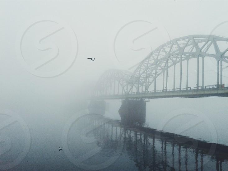 flying bird on the bridge photo