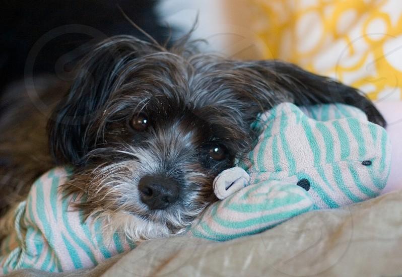 My sweet dog Harrison. photo