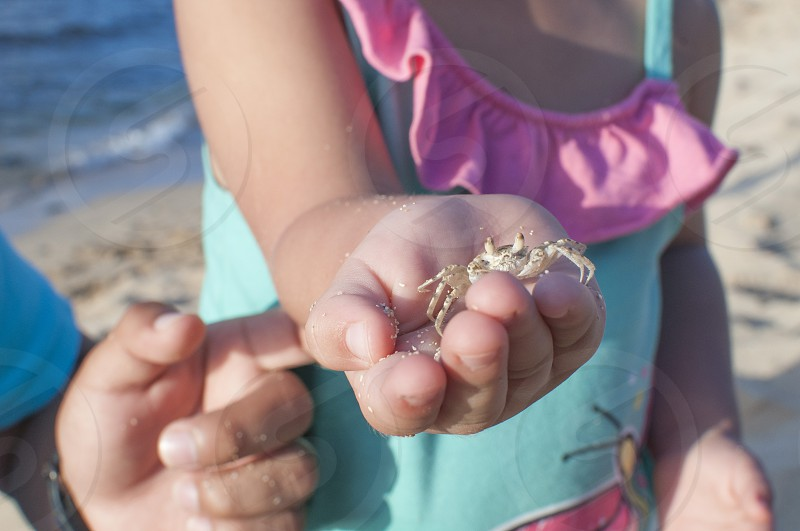 girl holding small crab photo