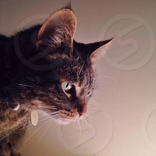 black cat photo