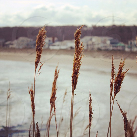view of brown dried grass photo