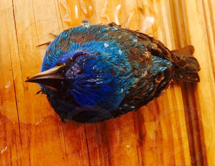black and blue bird photo