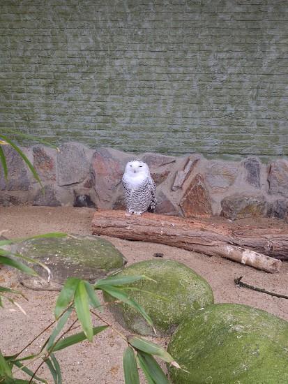 Antwerp Zoo photo