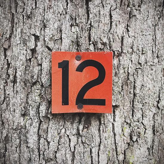 Tree bark texture orange 12 twelve sign detail number photo