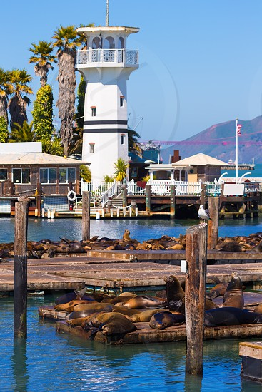 San Francisco Pier 39 lighthouse and seals at California USA photo