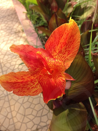 shallow focus photography of red and orange flower photo
