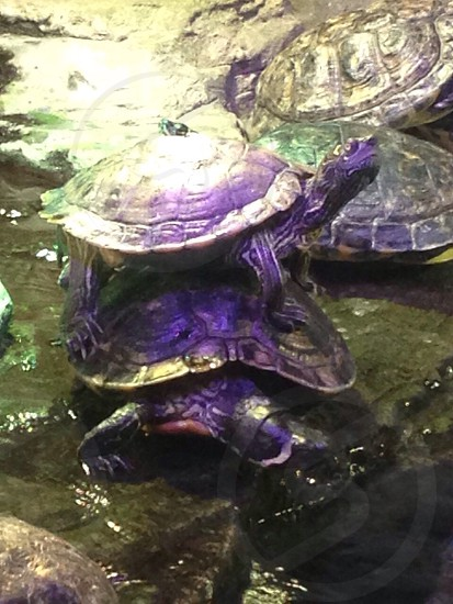 Stack of turtles photo