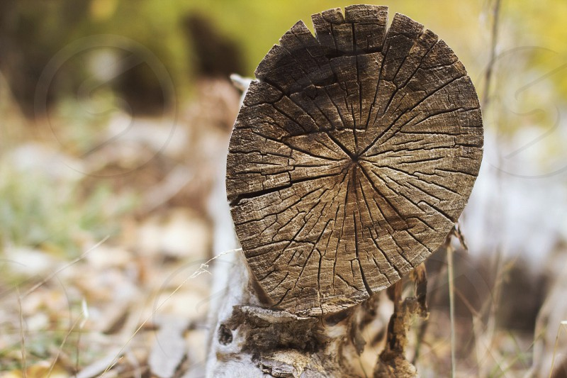 Crisp autumn log.  photo