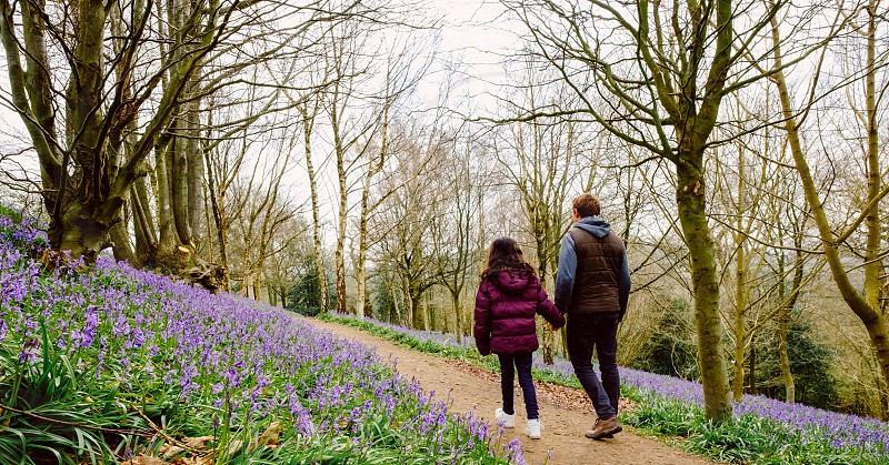 Back view of a father and daughter walking along a path hand in hand in blue bell wood photo