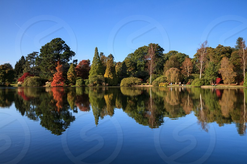reflection on a lake in autumn at the start of the autumn colour time. Location England - sheffield park photo