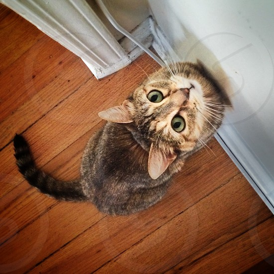 brown tabby cat with green eyes photo