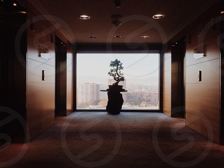 bonsai plant photo