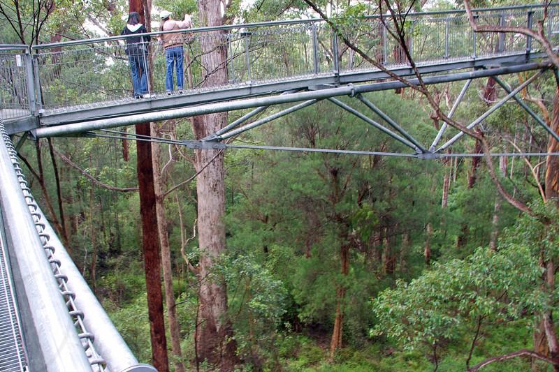 Walk treetop suspension bridge Karri Walpole Australia trees height vertigo walkway tourist photo
