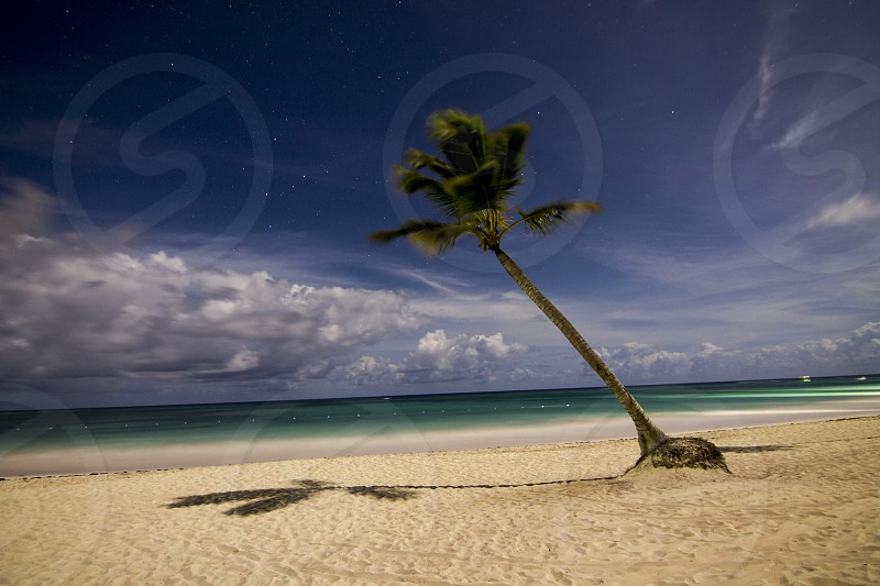 Lone Palm Tree in the middle of the night in Punta Cana photo