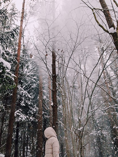 person in white winter coat starring on withered trees covered with snow photo