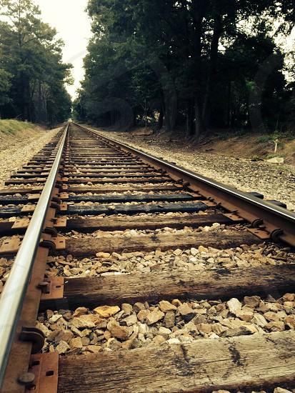 black metal rail track between trees photo