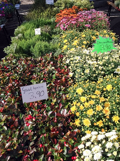 Flower market photo