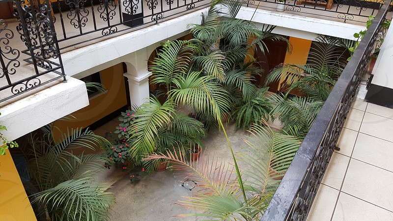 Courtyard Palm Trees Yellow Color photo