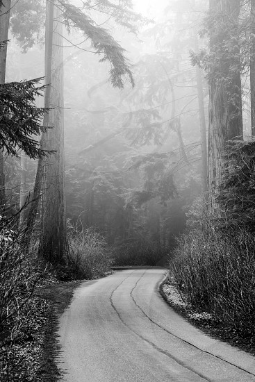 Forest road in the fog photo