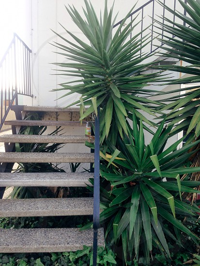 green leaf plant at the side of staircase photo