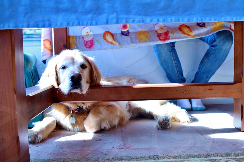 Lazy dog days  photo