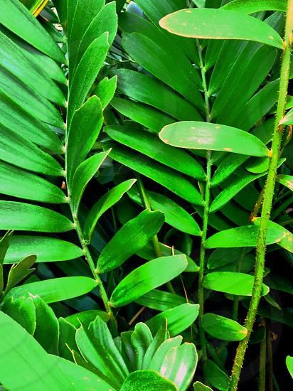 Florida flora and fauna  photo