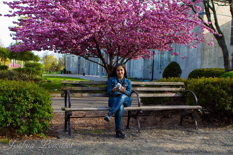 woman sitting on a park bench under a pink tree photo