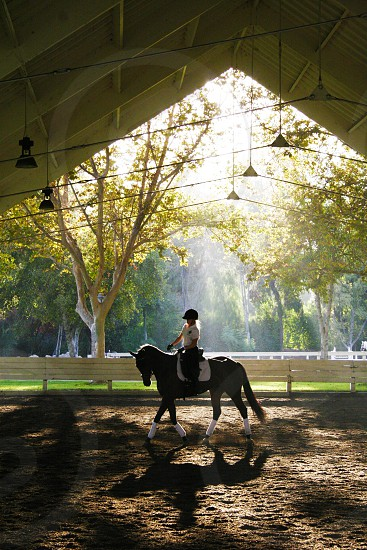 Horse Dressage Riding Lighting Arena Shadow Mist Horseback English Calm Quiet Peaceful Beauty Connection Communication Trot Balance photo