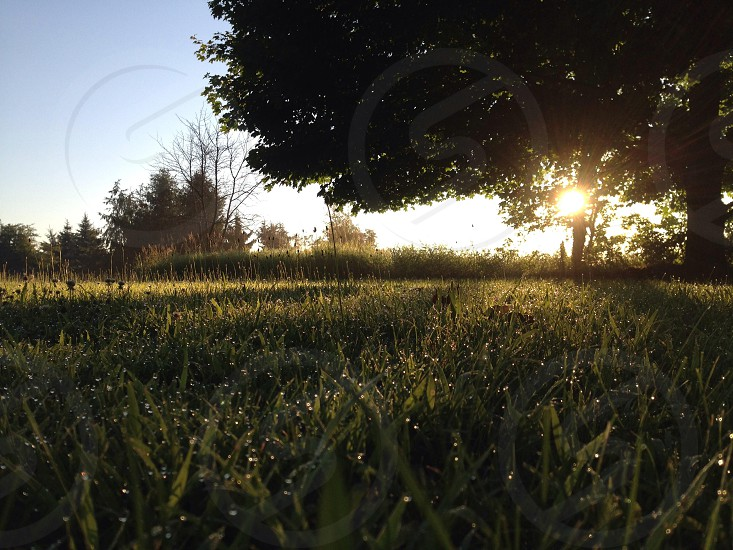 Morning sunrise with morning dew beads on the grass photo