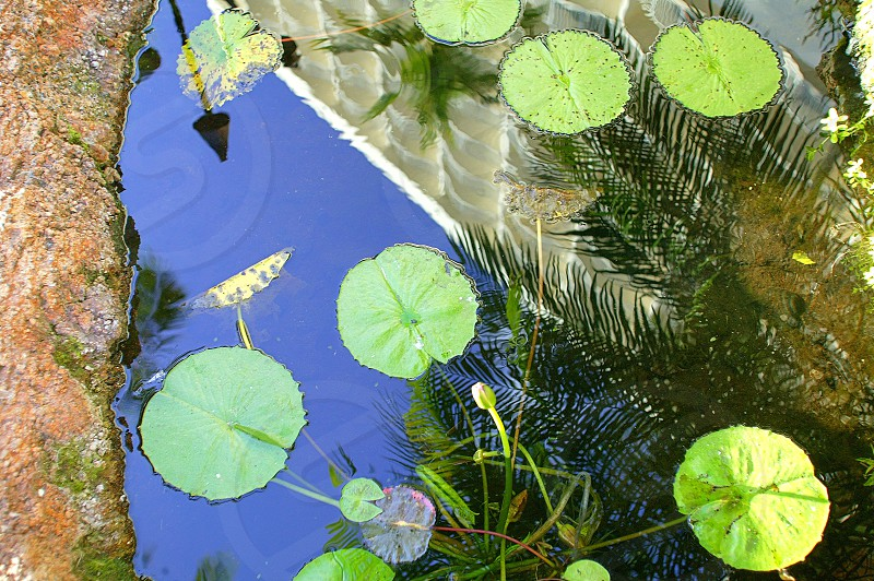 Resort Lilly Pads photo
