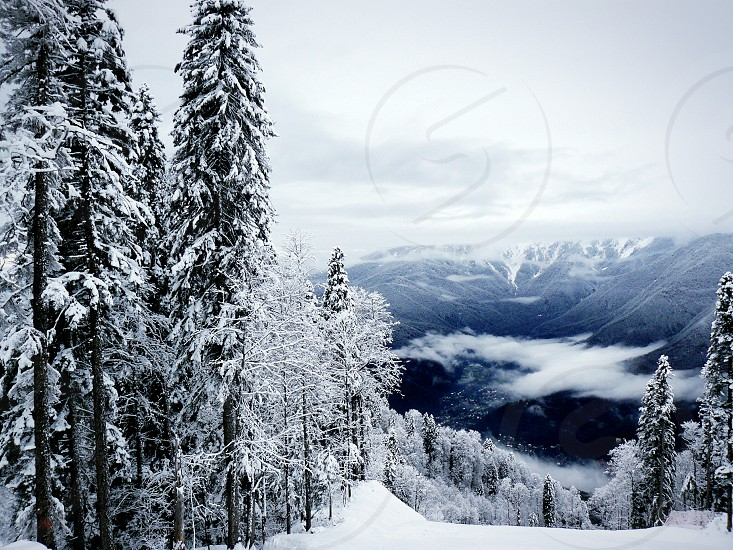 winter forest trees season snow cold ice ate snowdrift blizzard white landscape forest trees photo
