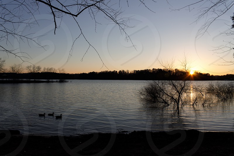 Sunset #landscape sunset #sun #outdoor #water #branches  photo