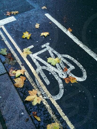 Fall in the Bike Lane photo
