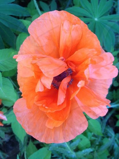 orange flower green leaves photo