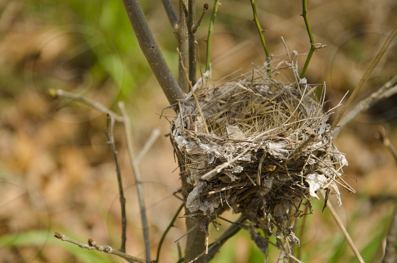 empty bird nest photo