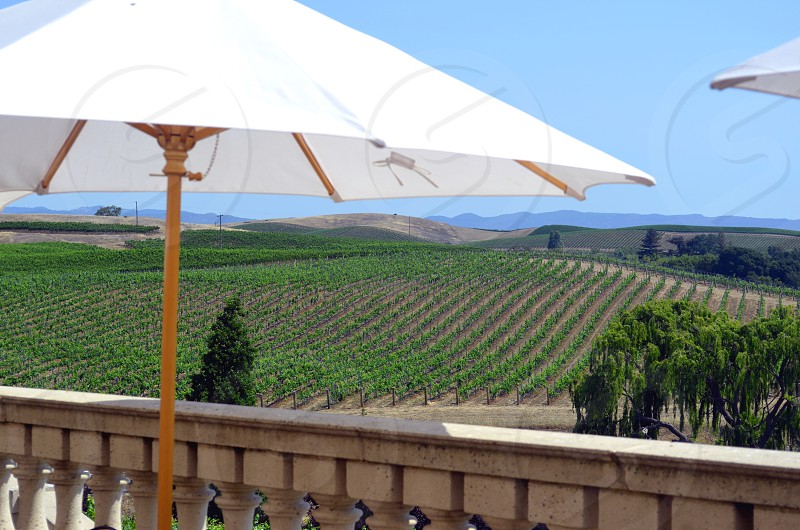 Napa Valley vineyard photo