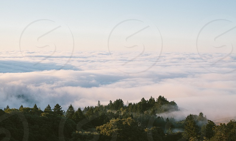 Above the clouds and trees during sunrise on Mount Tamalpais. photo