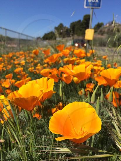 orange flower field photo